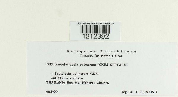 Pestalotiopsis image