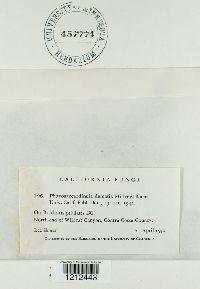 Phaeosaccardinula dematia image