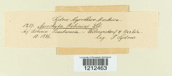 Phloeospora robiniae image