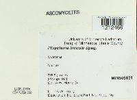 Mycosphaerella linicola image