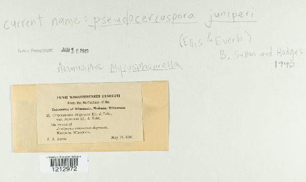Pseudocercospora juniperi image