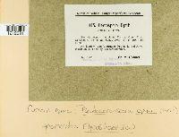Pseudocercospora opuli image