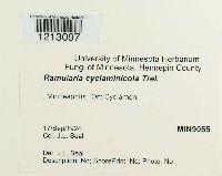 Image of Ramularia cyclaminicola