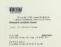 Ramularia variabilis image