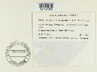 Stenella subsanguinea image