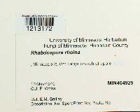 Image of Rhabdospora rhoina