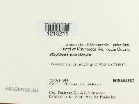 Rhytisma punctatum image