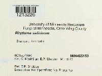 Rhytisma salicinum image