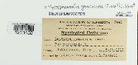 Mycosphaerella graminicola image