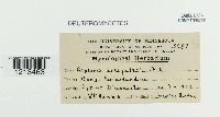 Septoria irregularis image