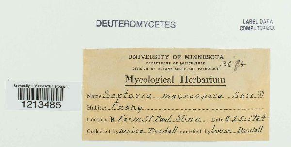 Septoria macrospora image