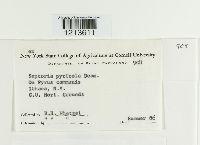 Mycosphaerella pyri image