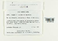 Septoria scrophulariae image