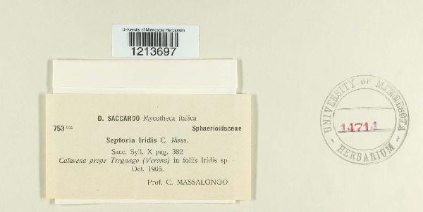 Septoria iridis image