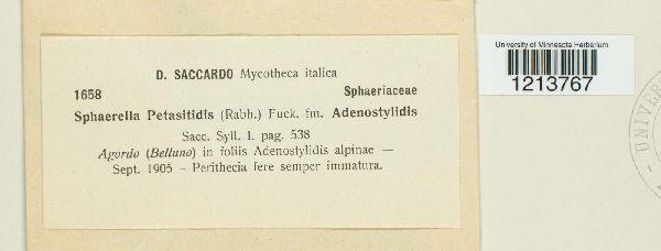 Sphaerella petasitidis image