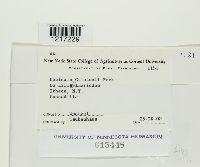 Uncinula clintonii image