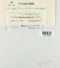 Image of Cercospora polygonati-maximowiczii