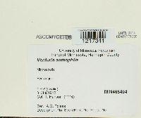 Image of Venturia anthophila