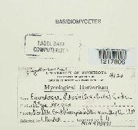 Aleurodiscus oakesii image