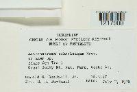 Asterostroma cervicolor image