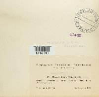 Clavariadelphus ligula image