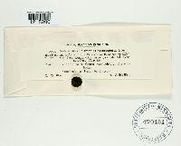 Image of Cortinarius heterosporus