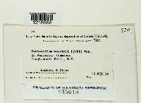 Exobasidium vaccinii image