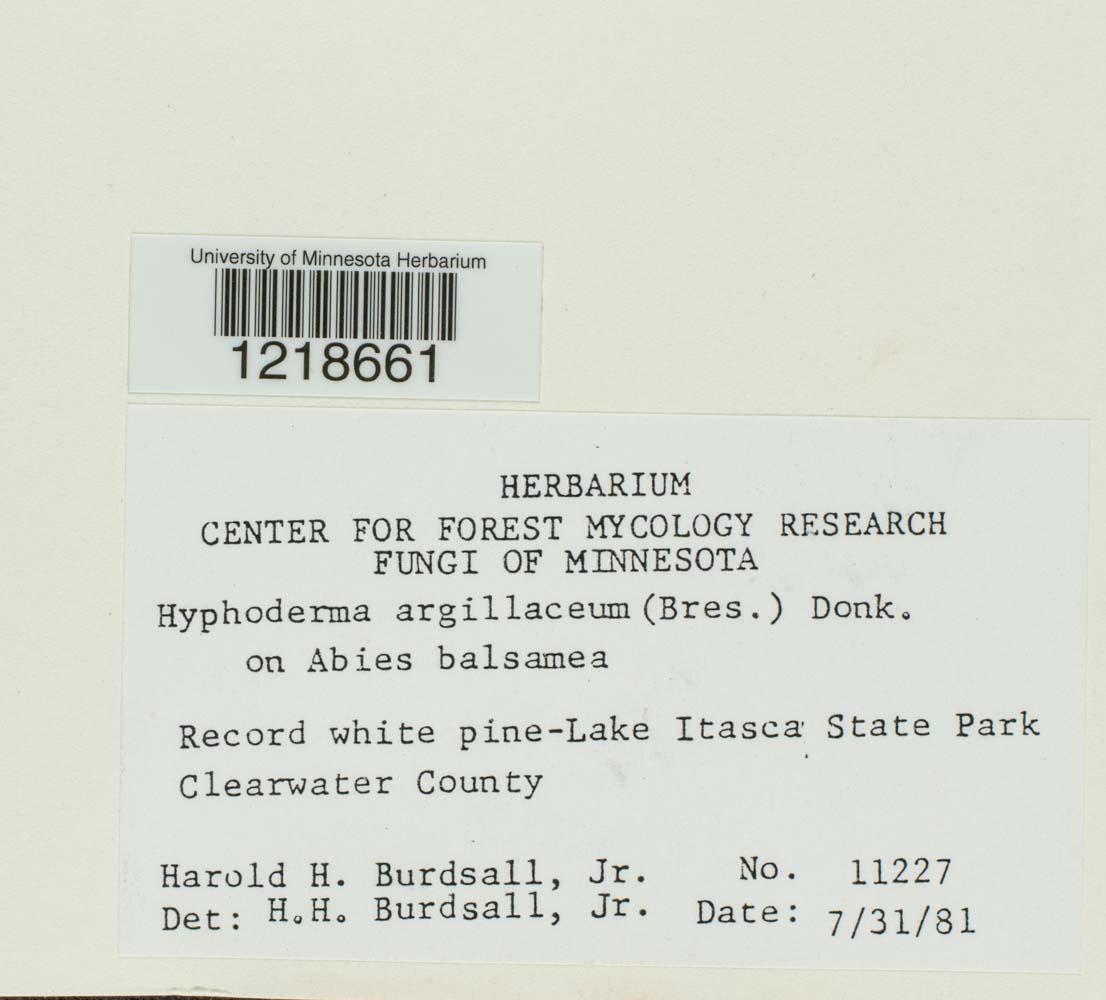 Hyphoderma argillaceum image