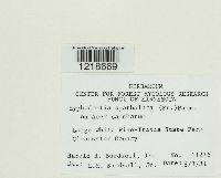 Hyphodontia spathulata image