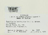 Hyphodontia barba-jovis image