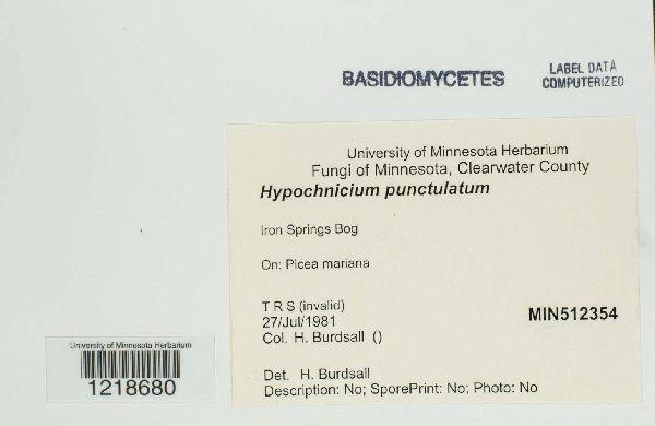 Hypochnicium punctulatum image