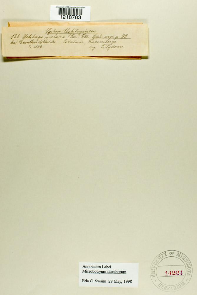 Microbotryum dianthorum image