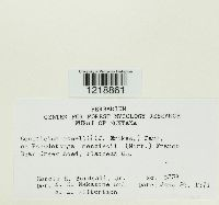 Odonticium romellii image