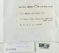 Trechispora mollusca image