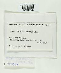 Cyphellopsis anomala image