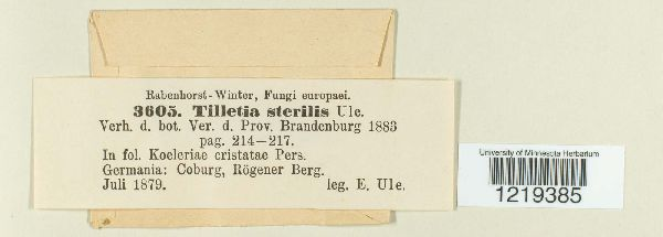 Tilletia sterilis image