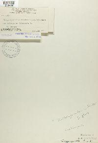 Jamesdicksonia brunkii image