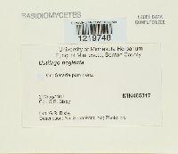 Macalpinomyces neglectus image