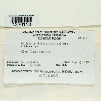Ustilago striiformis image