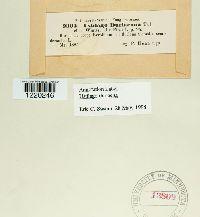 Microbotryum duriaeanum image