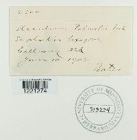 Image of Aecidium palmeri