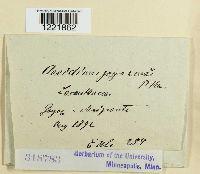Image of Aecidium goyazense