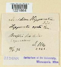 Image of Aecidium hippocrateae