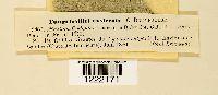 Gymnosporangium confusum image