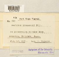 Image of Aecidium adenocauli