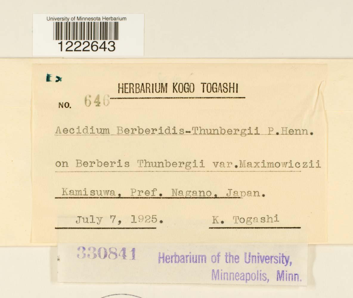 Aecidium berberidis-thunbergii image
