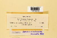 Caeoma fumariae image
