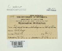 Coleosporium asterum image