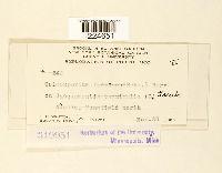 Coleosporium ipomoeae image