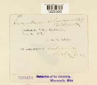 Cronartium coleosporioides image